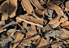 cork-oak-505263_1920